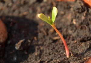 Einfach mal 'nen Apfelbaum pflanzen…
